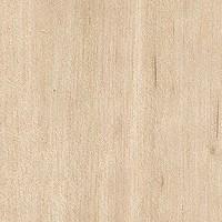 Abedul en tabl n venta de madera madera para modelismo - Madera de abedul ...